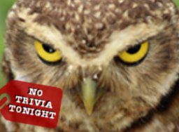 No trivia tonight (Superb Owl)